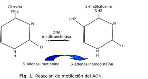 metilacion